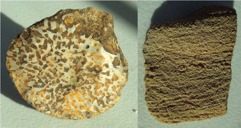 Exotic clasts from the Fremont gravel terrace.  Left: siliceous sponge from the Permian Kaibab Limestone.  Fossil is 4.5 cm across.  Right: oolitic clast from the Triassic Sinbad Limestone.  Clast is 5 cm high.