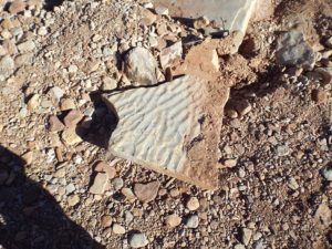 Figure 6: Wave ripples on sandstone. Image Credit: Dr Jon Clarke